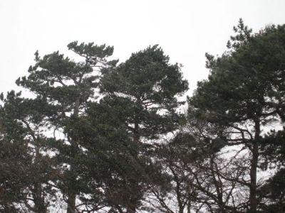 Nieve en Dundrum 2
